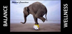 "Elephant balancing on ball with text ""Wildcat Connections: Balance & Wellness"""
